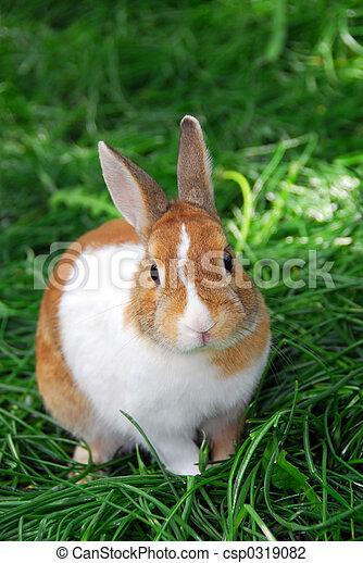 Bunny conejo - csp0319082