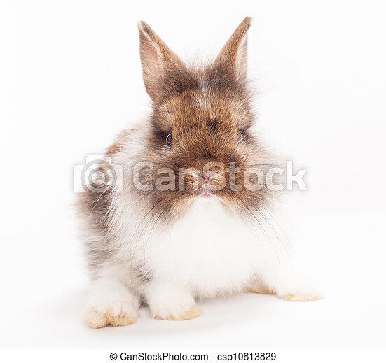Conejo - csp10813829