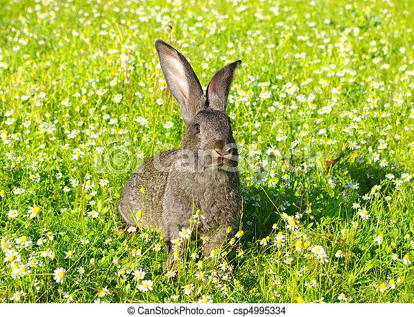 Conejo - csp4995334