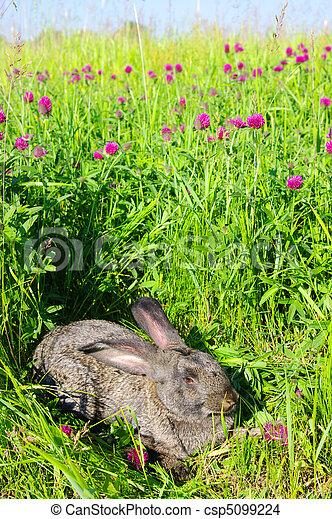 Conejo - csp5099224