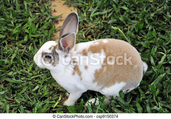 Conejo - csp9150374