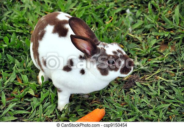 Conejo - csp9150454