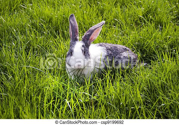 Conejo - csp9199692