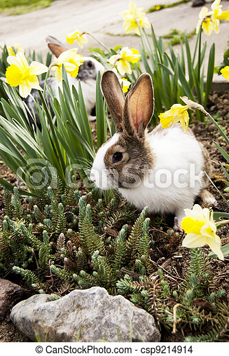 Conejo - csp9214914