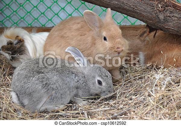 Conejo - csp10612592