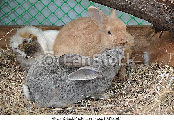 Conejo - csp10612597