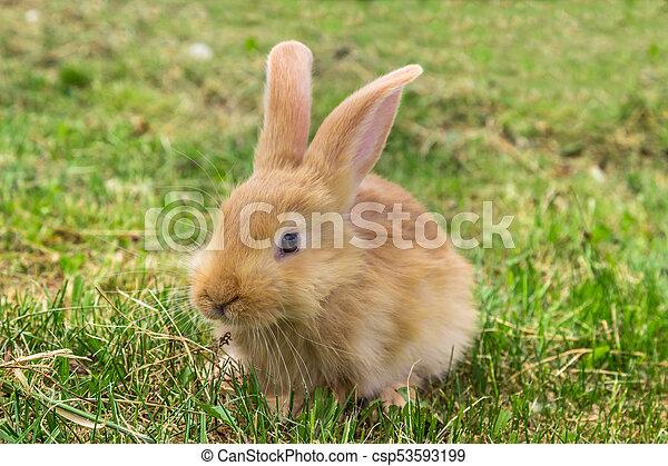 Conejo - csp53593199