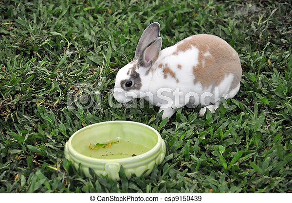 Conejo - csp9150439