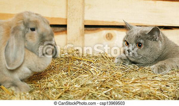 Gato y conejo - csp13969503