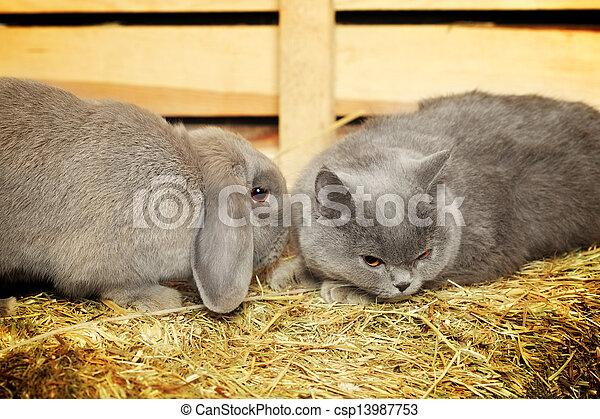 Gato y conejo - csp13987753