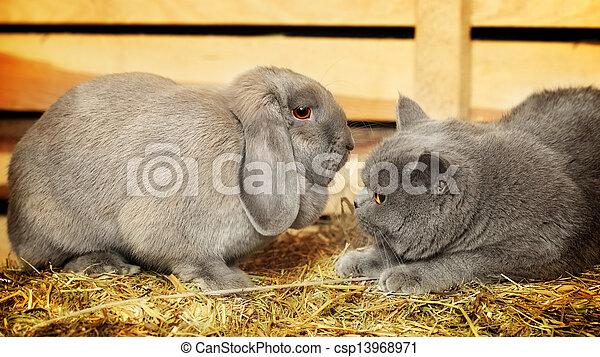 Gato y conejo - csp13968971