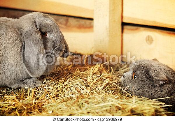 Gato y conejo - csp13986979