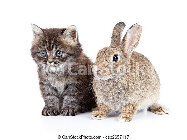 Gato y conejo - csp2657117