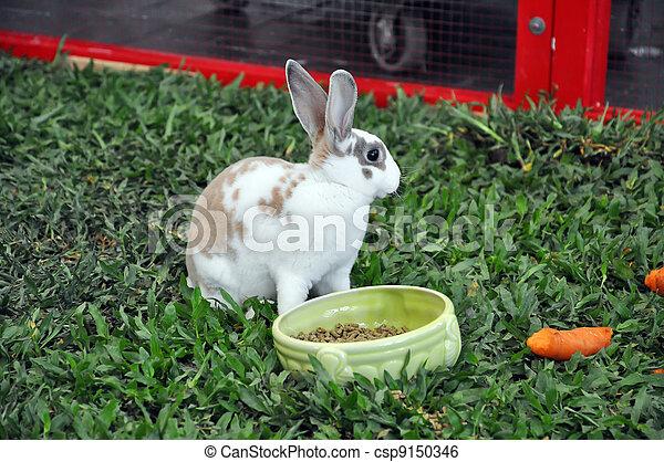 Conejo - csp9150346