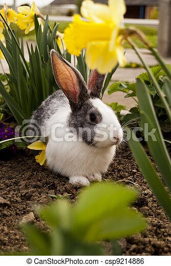 Conejo - csp9214886