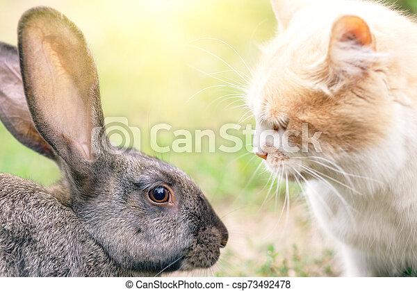 Gato y conejo frente al otro - csp73492478