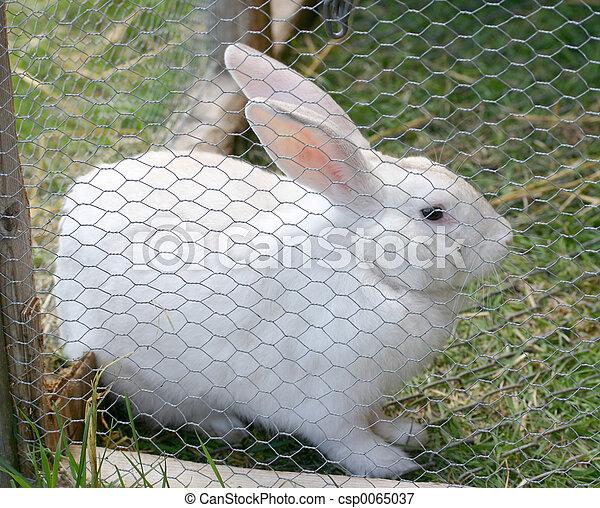 Conejo - csp0065037