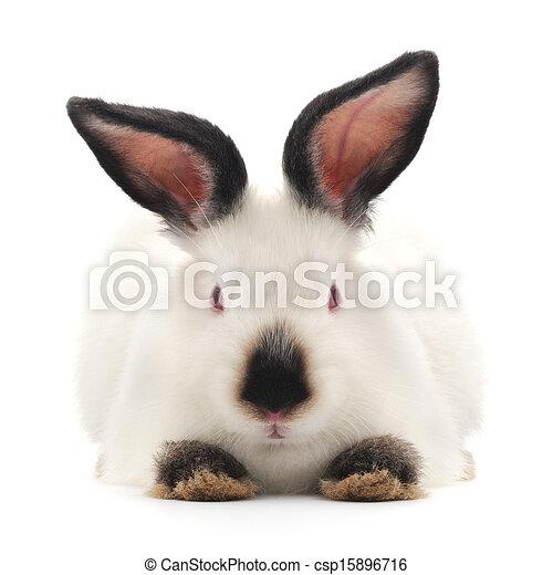 Conejo - csp15896716