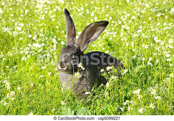 Conejo - csp5099221