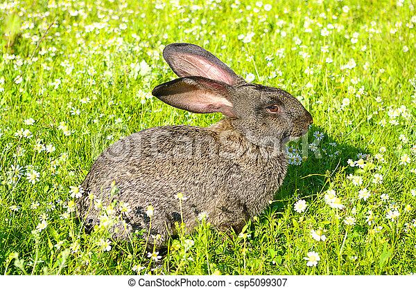 Conejo - csp5099307