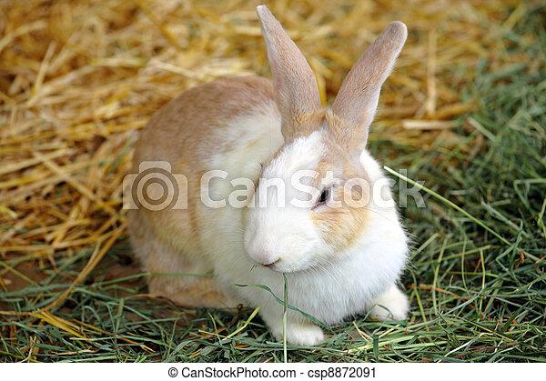 Conejo - csp8872091
