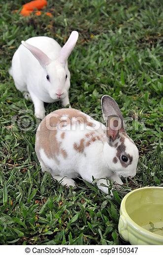 Conejo - csp9150347