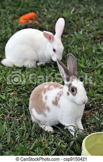 Conejo - csp9150421