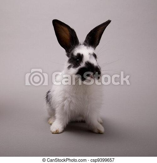 Conejo - csp9399657