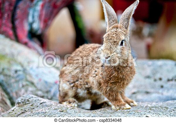 Conejo - csp8334048