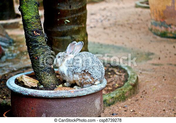 Conejo - csp8739278