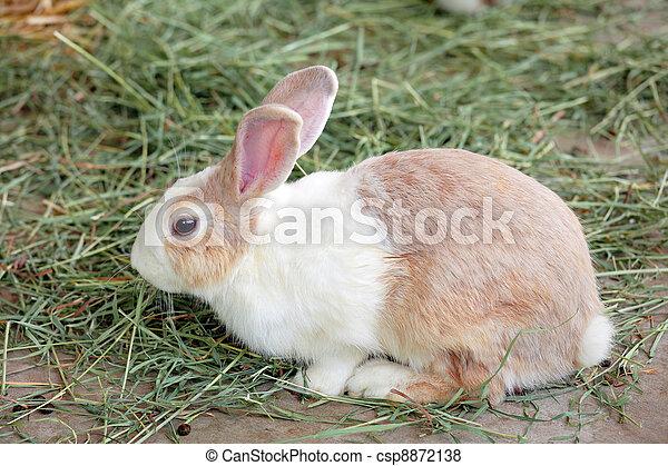 Conejo - csp8872138