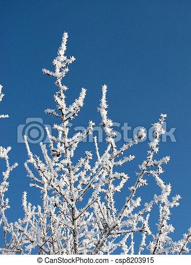 congelado, árvores - csp8203915