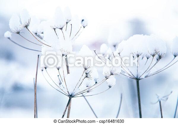 congelado, plantas, inverno - csp16481630