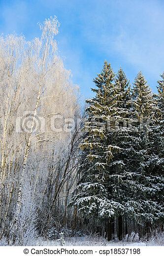 Conif re feuilles caduques arbres hiver for t - Arbres a feuilles caduques ...
