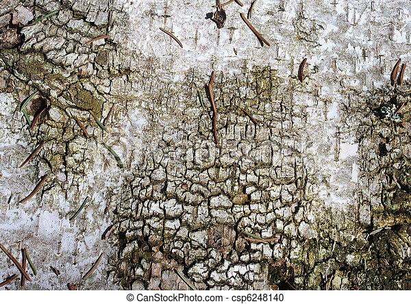 Conifere Vieux Papier Peint Aiguilles Fond Bouleau Ecorce Ou Canstock