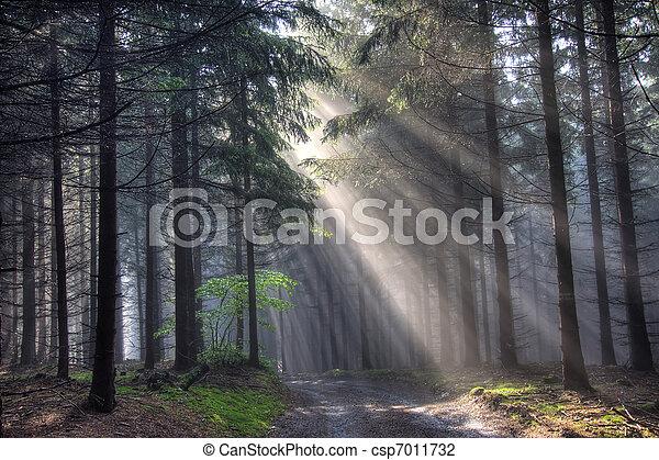conifero, nebbia, foresta, strada - csp7011732