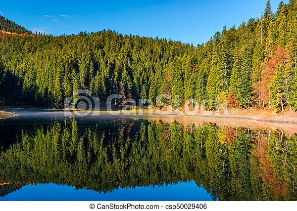 coniferous forest with lake in mountains - csp50029406