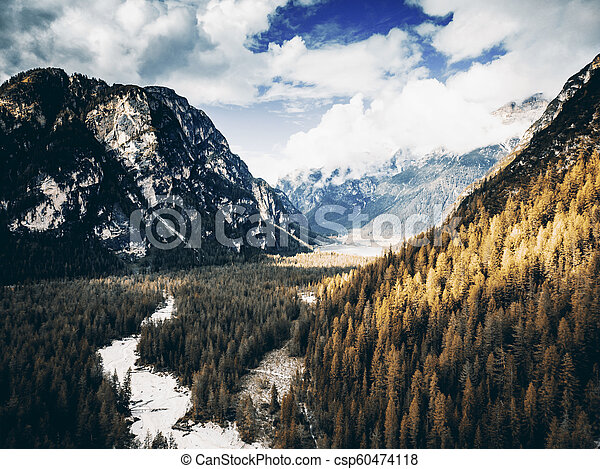 Coniferous trees in fall colors in high mountains - csp60474118