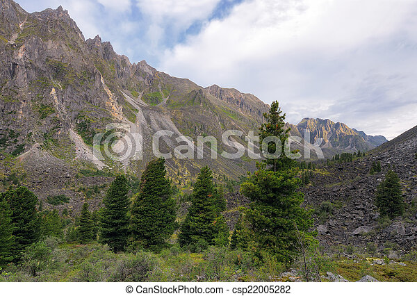 Coniferous trees in the mountains - csp22005282