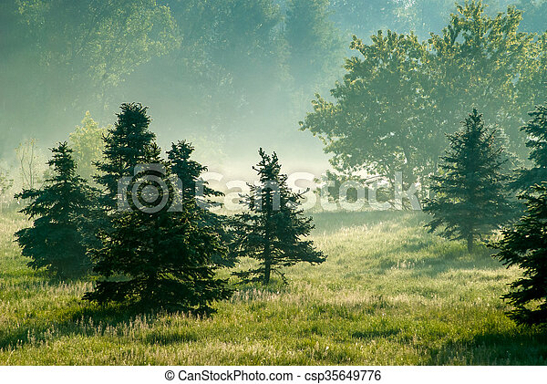 Conifers in morning backlight - csp35649776