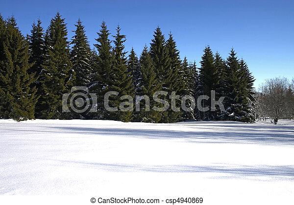 conifers, inverno - csp4940869
