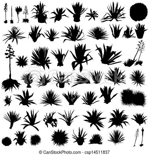 Juego de agave - csp14511837