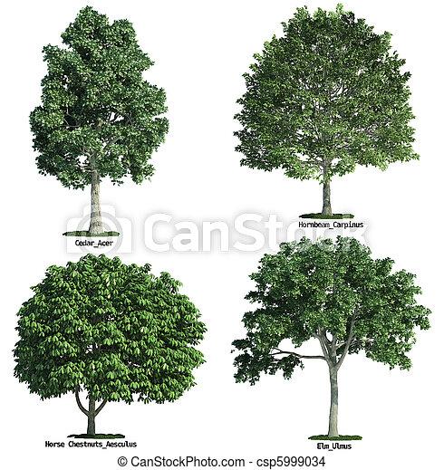 conjunto, aislado, contra, cuatro, árboles, puro, blanco - csp5999034