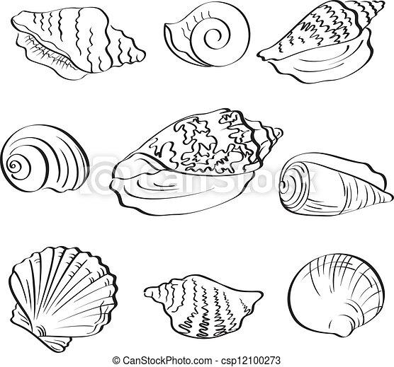 Conjunto, contorno, conchas marinas. Diferente, conjunto, fondo ...