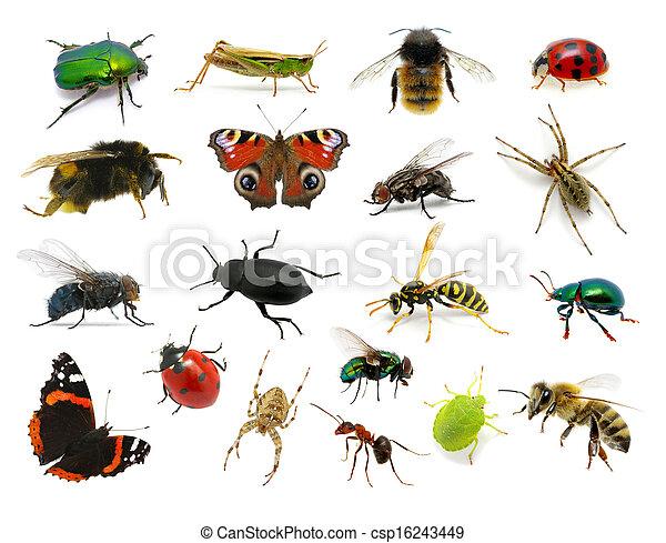 Insectos almacen de fotos e imágenes. 314.381 Insectos retratos y ...