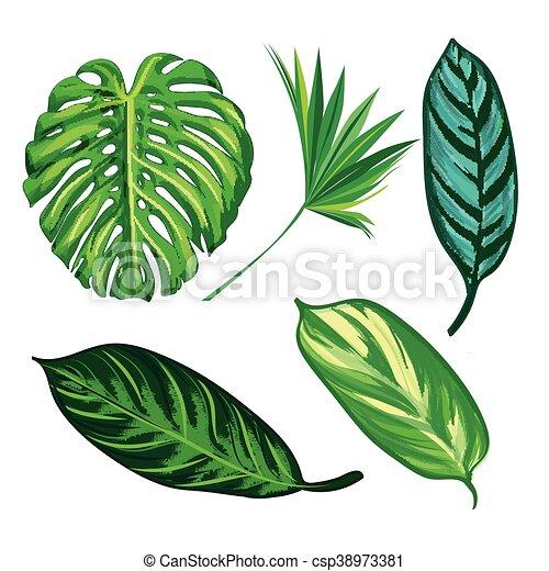 Colección de hojas tropicales, vector de aislamiento. Listos - csp38973381