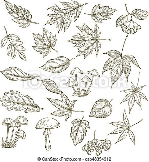 Un juego de hojas dibujadas a mano, bayas y hongos, ilustración ...