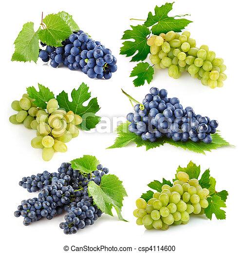 conjunto, permisos de uva, verde, fruits, fresco - csp4114600