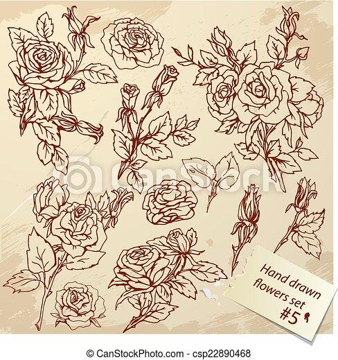 Conjunto Realista Vendimia Mano Rosas Grafico Im Dibujado