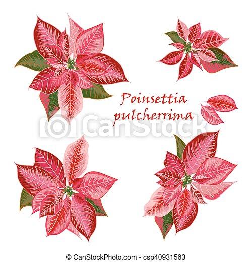 Conjunto Rosa Color Flor De Nochebuena Flores Rojo Conjunto